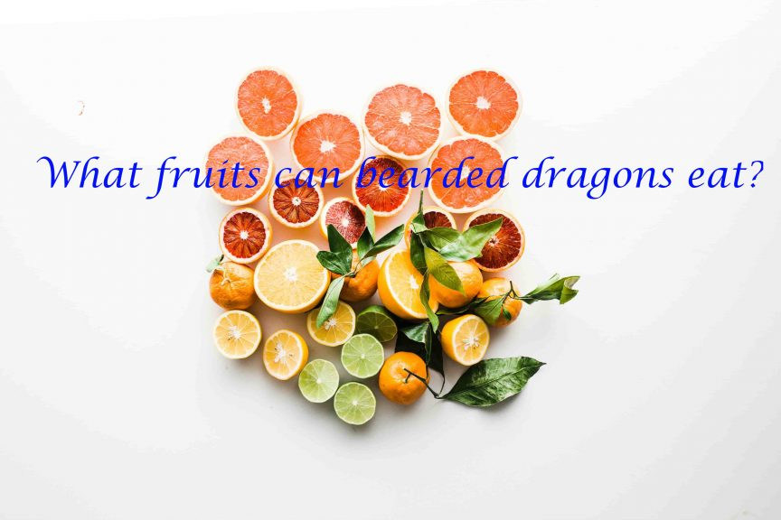 What fruits can bearded dragons eat?