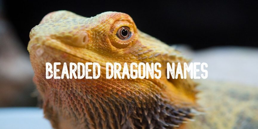 BEARDED DRAGONS NAMES